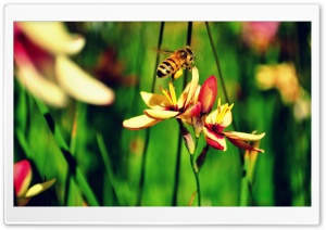 The Bees and The Flowers HD Wide Wallpaper for Widescreen