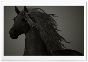 The Black Horse HD Wide Wallpaper for Widescreen