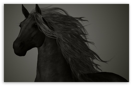 The Black Horse HD wallpaper for Wide 16:10 5:3 Widescreen WHXGA WQXGA WUXGA WXGA WGA ; HD 16:9 High Definition WQHD QWXGA 1080p 900p 720p QHD nHD ; Standard 4:3 5:4 3:2 Fullscreen UXGA XGA SVGA QSXGA SXGA DVGA HVGA HQVGA devices ( Apple PowerBook G4 iPhone 4 3G 3GS iPod Touch ) ; Tablet 1:1 ; iPad 1/2/Mini ; Mobile 4:3 5:3 3:2 16:9 5:4 - UXGA XGA SVGA WGA DVGA HVGA HQVGA devices ( Apple PowerBook G4 iPhone 4 3G 3GS iPod Touch ) WQHD QWXGA 1080p 900p 720p QHD nHD QSXGA SXGA ;
