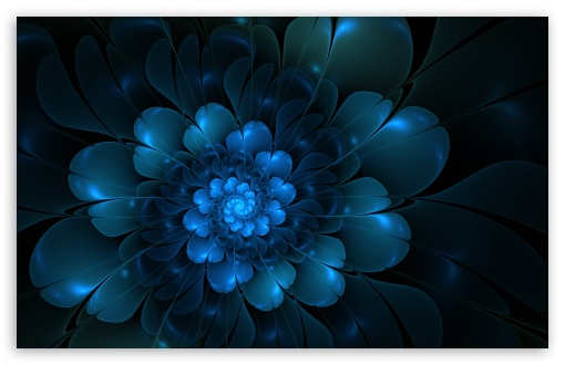 The Blue Flower HD wallpaper for Wide 16:10 5:3 Widescreen WHXGA WQXGA WUXGA WXGA WGA ; HD 16:9 High Definition WQHD QWXGA 1080p 900p 720p QHD nHD ; Standard 4:3 5:4 3:2 Fullscreen UXGA XGA SVGA QSXGA SXGA DVGA HVGA HQVGA devices ( Apple PowerBook G4 iPhone 4 3G 3GS iPod Touch ) ; iPad 1/2/Mini ; Mobile 4:3 5:3 3:2 16:9 5:4 - UXGA XGA SVGA WGA DVGA HVGA HQVGA devices ( Apple PowerBook G4 iPhone 4 3G 3GS iPod Touch ) WQHD QWXGA 1080p 900p 720p QHD nHD QSXGA SXGA ;