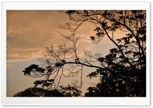 The Branches And Leaves Of A Tree HD Wide Wallpaper for Widescreen