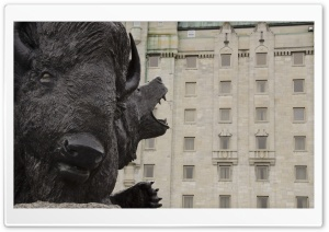 The Buffalo HD Wide Wallpaper for Widescreen