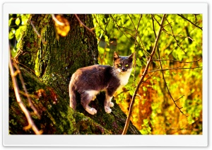 The Cat HD Wide Wallpaper for Widescreen