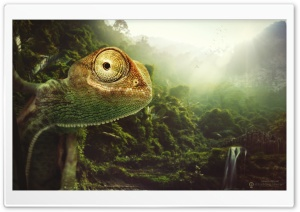 The Cheerful Chameleon HD Wide Wallpaper for Widescreen
