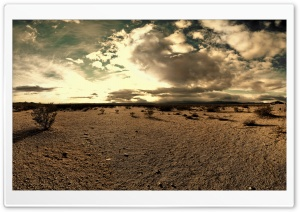 The Desert Tortoise Natural Area HD Wide Wallpaper for Widescreen