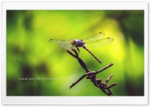 The Dragon Fly HD Wide Wallpaper for Widescreen