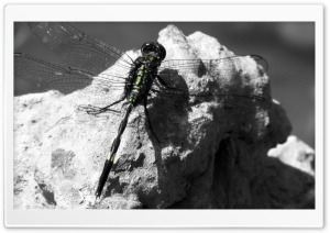 The Dragonfly HD Wide Wallpaper for Widescreen