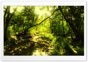 THE ENCHANTED FOREST_Chayan Mehta HD Wide Wallpaper for Widescreen