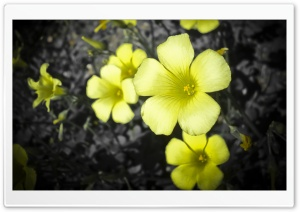The Flower HD Wide Wallpaper for Widescreen