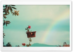 The Flower Pot and The Rainbow
