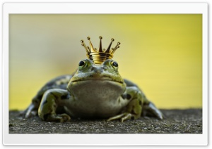 The Frog Prince HD Wide Wallpaper for 4K UHD Widescreen desktop & smartphone