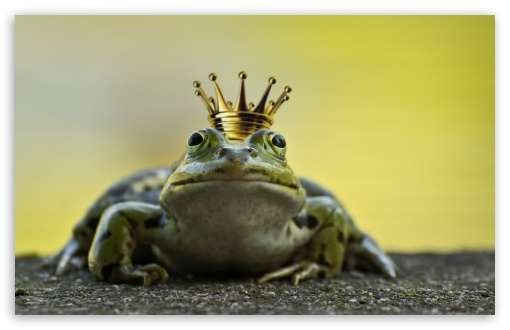 The Frog Prince ❤ 4K UHD Wallpaper for Wide 16:10 5:3 Widescreen WHXGA WQXGA WUXGA WXGA WGA ; 4K UHD 16:9 Ultra High Definition 2160p 1440p 1080p 900p 720p ; Standard 4:3 5:4 3:2 Fullscreen UXGA XGA SVGA QSXGA SXGA DVGA HVGA HQVGA ( Apple PowerBook G4 iPhone 4 3G 3GS iPod Touch ) ; Smartphone 16:9 3:2 5:3 2160p 1440p 1080p 900p 720p DVGA HVGA HQVGA ( Apple PowerBook G4 iPhone 4 3G 3GS iPod Touch ) WGA ; Tablet 1:1 ; iPad 1/2/Mini ; Mobile 4:3 5:3 3:2 16:9 5:4 - UXGA XGA SVGA WGA DVGA HVGA HQVGA ( Apple PowerBook G4 iPhone 4 3G 3GS iPod Touch ) 2160p 1440p 1080p 900p 720p QSXGA SXGA ;