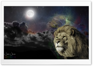 The Great Lion HD Wide Wallpaper for Widescreen