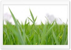 The Green Leaf HD Wide Wallpaper for 4K UHD Widescreen desktop & smartphone