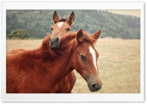 The Horses HD Wide Wallpaper for Widescreen