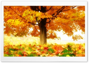 The Joy Of Autumn HD Wide Wallpaper for Widescreen
