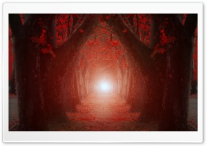 The Light At The End Of The Tree Tunnel HD Wide Wallpaper for 4K UHD Widescreen desktop & smartphone