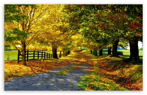 The Most Beautiful Autumn HD wallpaper for Wide 16:10 5:3 Widescreen WHXGA WQXGA WUXGA WXGA WGA ; HD 16:9 High Definition WQHD QWXGA 1080p 900p 720p QHD nHD ; Standard 4:3 5:4 3:2 Fullscreen UXGA XGA SVGA QSXGA SXGA DVGA HVGA HQVGA devices ( Apple PowerBook G4 iPhone 4 3G 3GS iPod Touch ) ; Tablet 1:1 ; iPad 1/2/Mini ; Mobile 4:3 5:3 3:2 16:9 5:4 - UXGA XGA SVGA WGA DVGA HVGA HQVGA devices ( Apple PowerBook G4 iPhone 4 3G 3GS iPod Touch ) WQHD QWXGA 1080p 900p 720p QHD nHD QSXGA SXGA ;