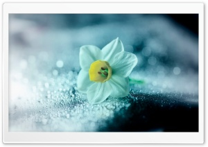The Narcissus HD Wide Wallpaper for Widescreen
