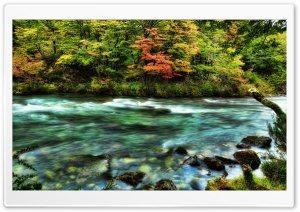 The River Passed The Quivering Forest In The Autumn HD Wide Wallpaper for 4K UHD Widescreen desktop & smartphone