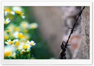 The Rusty Old Wire And The Flowers HD Wide Wallpaper for Widescreen