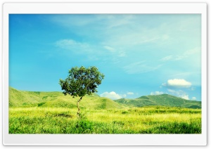 The Spring HD Wide Wallpaper for Widescreen