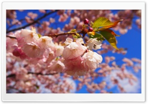 The Spring Beginning Ultra HD Wallpaper for 4K UHD Widescreen desktop, tablet & smartphone
