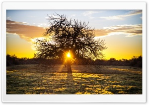 The Sunset Tree HD Wide Wallpaper for Widescreen