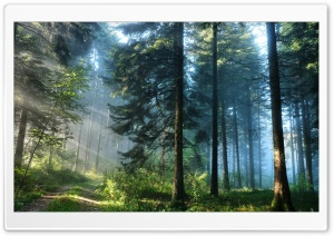 The Thick Forest HD Wide Wallpaper for 4K UHD Widescreen desktop & smartphone