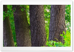 The Tree Logs HD Wide Wallpaper for Widescreen