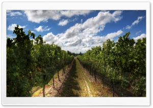 The Wines Of New Zealand HD Wide Wallpaper for Widescreen