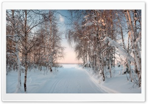 The Winter In The Evening HD Wide Wallpaper for Widescreen