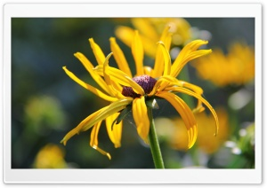 The Yellow Flower HD Wide Wallpaper for Widescreen