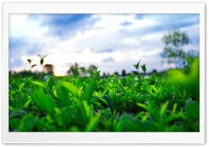 Thien Nhien HD Wide Wallpaper for 4K UHD Widescreen desktop & smartphone