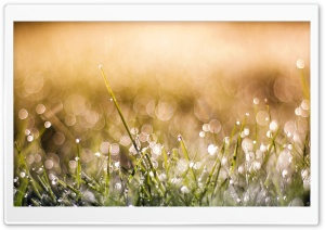 Thin Grass HD Wide Wallpaper for Widescreen