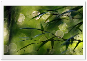 Thin Green Leaves HD Wide Wallpaper for Widescreen