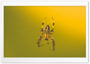 This Awesome Spider HD Wide Wallpaper for Widescreen