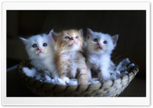 Three Adorable Kittens in a Small Basket HD Wide Wallpaper for 4K UHD Widescreen desktop & smartphone