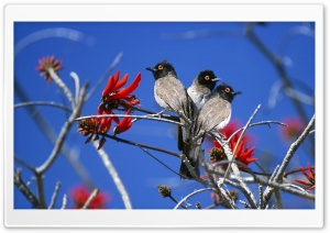 Three Birds Etosha National Park Namibia HD Wide Wallpaper for Widescreen