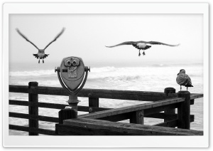 Three Birds On A Pier HD Wide Wallpaper for Widescreen
