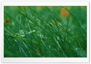 Through Green Grass HD Wide Wallpaper for Widescreen
