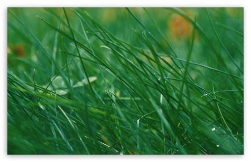 Through Green Grass HD wallpaper for Wide 16:10 5:3 Widescreen WHXGA WQXGA WUXGA WXGA WGA ; HD 16:9 High Definition WQHD QWXGA 1080p 900p 720p QHD nHD ; UHD 16:9 WQHD QWXGA 1080p 900p 720p QHD nHD ; Standard 4:3 5:4 3:2 Fullscreen UXGA XGA SVGA QSXGA SXGA DVGA HVGA HQVGA devices ( Apple PowerBook G4 iPhone 4 3G 3GS iPod Touch ) ; Tablet 1:1 ; iPad 1/2/Mini ; Mobile 4:3 5:3 3:2 16:9 5:4 - UXGA XGA SVGA WGA DVGA HVGA HQVGA devices ( Apple PowerBook G4 iPhone 4 3G 3GS iPod Touch ) WQHD QWXGA 1080p 900p 720p QHD nHD QSXGA SXGA ; Dual 16:10 5:3 16:9 4:3 5:4 WHXGA WQXGA WUXGA WXGA WGA WQHD QWXGA 1080p 900p 720p QHD nHD UXGA XGA SVGA QSXGA SXGA ;