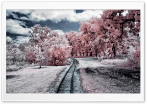 Through the Pink Woods HD Wide Wallpaper for Widescreen