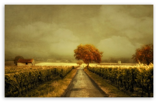 Veeyard Meaning: Through The Vineyard 4K HD Desktop Wallpaper For • Wide