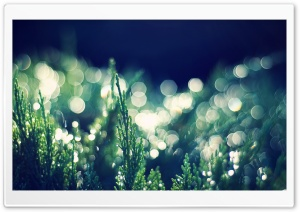 Thuja Occidentalis Bokeh HD Wide Wallpaper for Widescreen