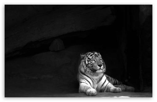 Tiger HD wallpaper for Wide 16:10 5:3 Widescreen WHXGA WQXGA WUXGA WXGA WGA ; HD 16:9 High Definition WQHD QWXGA 1080p 900p 720p QHD nHD ; UHD 16:9 WQHD QWXGA 1080p 900p 720p QHD nHD ; Standard 4:3 5:4 3:2 Fullscreen UXGA XGA SVGA QSXGA SXGA DVGA HVGA HQVGA devices ( Apple PowerBook G4 iPhone 4 3G 3GS iPod Touch ) ; Tablet 1:1 ; iPad 1/2/Mini ; Mobile 4:3 5:3 3:2 16:9 5:4 - UXGA XGA SVGA WGA DVGA HVGA HQVGA devices ( Apple PowerBook G4 iPhone 4 3G 3GS iPod Touch ) WQHD QWXGA 1080p 900p 720p QHD nHD QSXGA SXGA ;