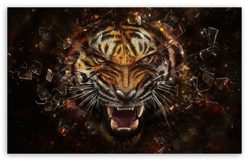Tiger Backgrounds HD wallpaper for Wide 16:10 5:3 Widescreen WHXGA WQXGA WUXGA WXGA WGA ; HD 16:9 High Definition WQHD QWXGA 1080p 900p 720p QHD nHD ; Standard 4:3 5:4 3:2 Fullscreen UXGA XGA SVGA QSXGA SXGA DVGA HVGA HQVGA devices ( Apple PowerBook G4 iPhone 4 3G 3GS iPod Touch ) ; Tablet 1:1 ; iPad 1/2/Mini ; Mobile 4:3 5:3 3:2 16:9 5:4 - UXGA XGA SVGA WGA DVGA HVGA HQVGA devices ( Apple PowerBook G4 iPhone 4 3G 3GS iPod Touch ) WQHD QWXGA 1080p 900p 720p QHD nHD QSXGA SXGA ;