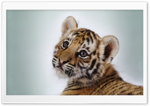 Tiger Cub HD Wide Wallpaper for Widescreen