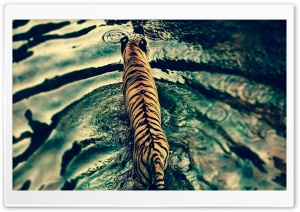 Tiger In Water HD Wide Wallpaper for Widescreen