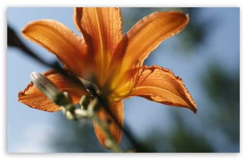 Tiger Lilly ❤ 4K UHD Wallpaper for Wide 16:10 5:3 Widescreen WHXGA WQXGA WUXGA WXGA WGA ; 4K UHD 16:9 Ultra High Definition 2160p 1440p 1080p 900p 720p ; UHD 16:9 2160p 1440p 1080p 900p 720p ; Standard 4:3 5:4 3:2 Fullscreen UXGA XGA SVGA QSXGA SXGA DVGA HVGA HQVGA ( Apple PowerBook G4 iPhone 4 3G 3GS iPod Touch ) ; Tablet 1:1 ; iPad 1/2/Mini ; Mobile 4:3 5:3 3:2 16:9 5:4 - UXGA XGA SVGA WGA DVGA HVGA HQVGA ( Apple PowerBook G4 iPhone 4 3G 3GS iPod Touch ) 2160p 1440p 1080p 900p 720p QSXGA SXGA ;